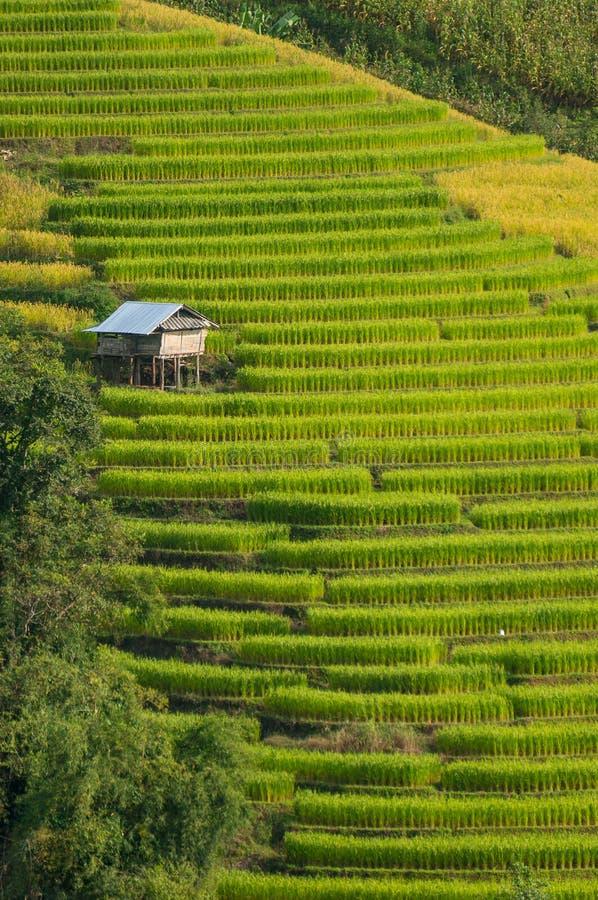Terraço do arroz com abrigo pequeno fotografia de stock
