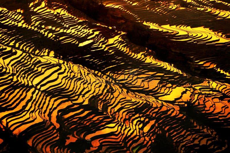 Terraço do arroz de Bada no crepúsculo foto de stock