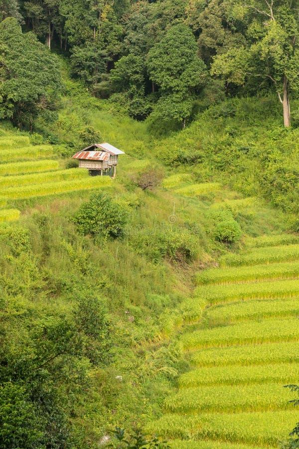 Terraço do arroz de Mae Klang Luang com abrigo pequeno foto de stock royalty free