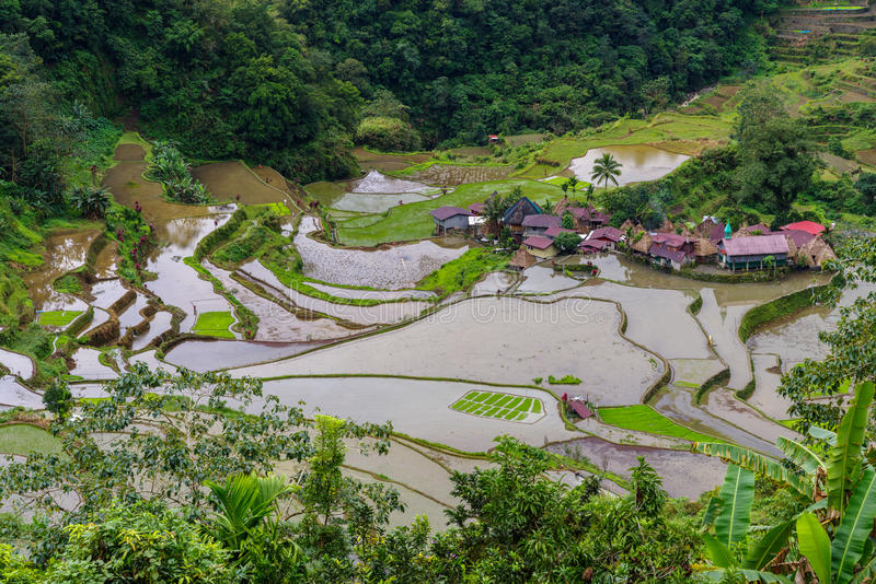 Terraço do arroz no banaue fotografia de stock