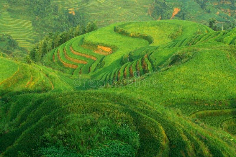 Terraço verde do arroz em mountaines da porcelana imagem de stock