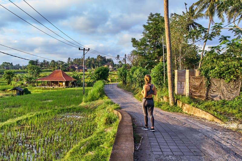 Terraços bonitos da vila e do arroz em Ubud, ilha de Bali, Indone foto de stock royalty free
