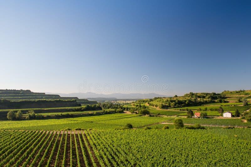 Terraços bonitos do vinhedo em Ihringen, Alemanha sul fotografia de stock