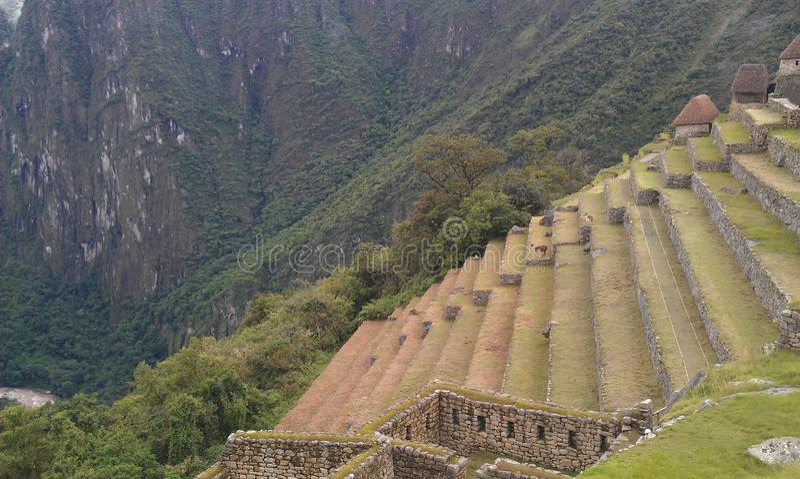 Terraços de Machu Picchu foto de stock royalty free