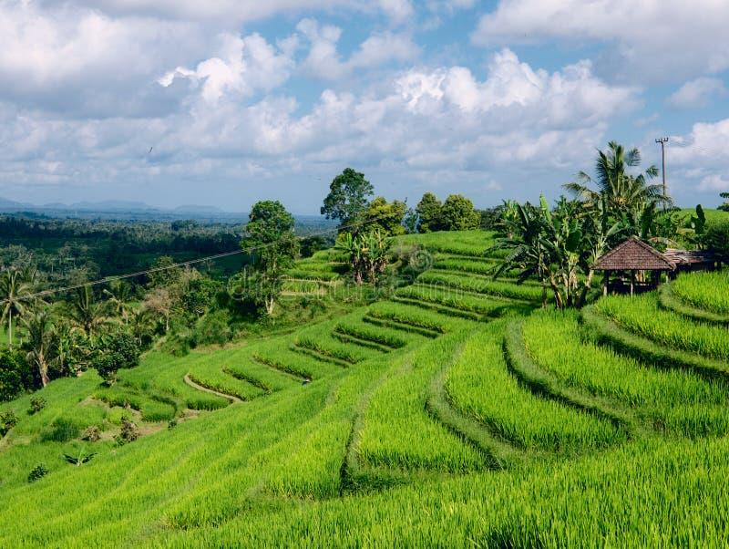 Terraços do arroz foto de stock