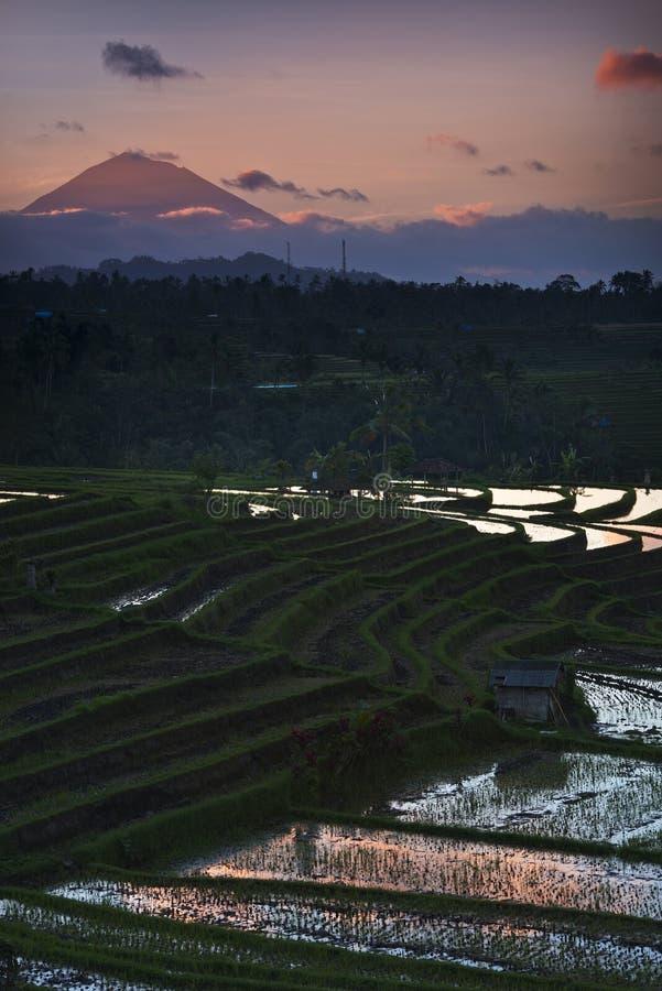 Terraços do arroz de Bali - de Jati Luwih imagens de stock