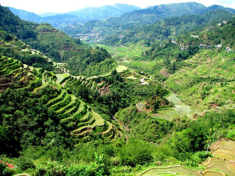 Terraços do arroz de Banaue fotografia de stock royalty free