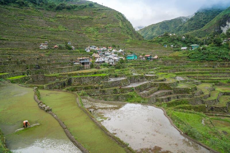 Terraços do arroz de Banaue fotografia de stock