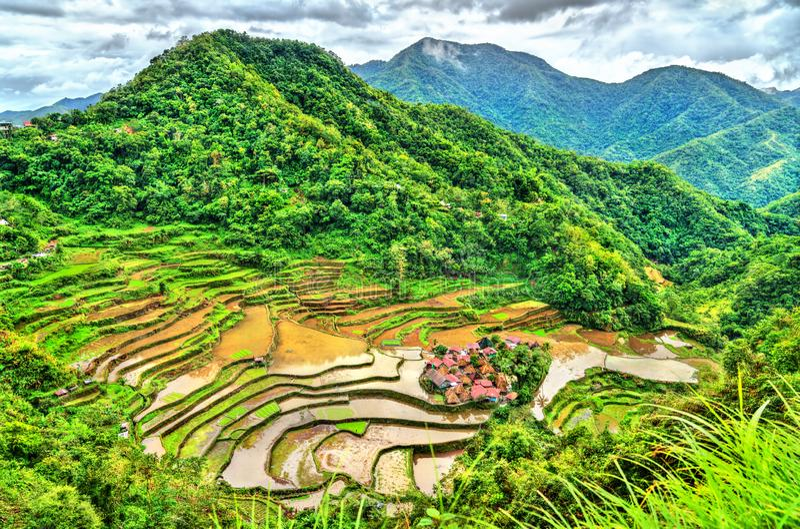 Terraços do arroz de Bangaan - Luzon, Filipinas foto de stock royalty free