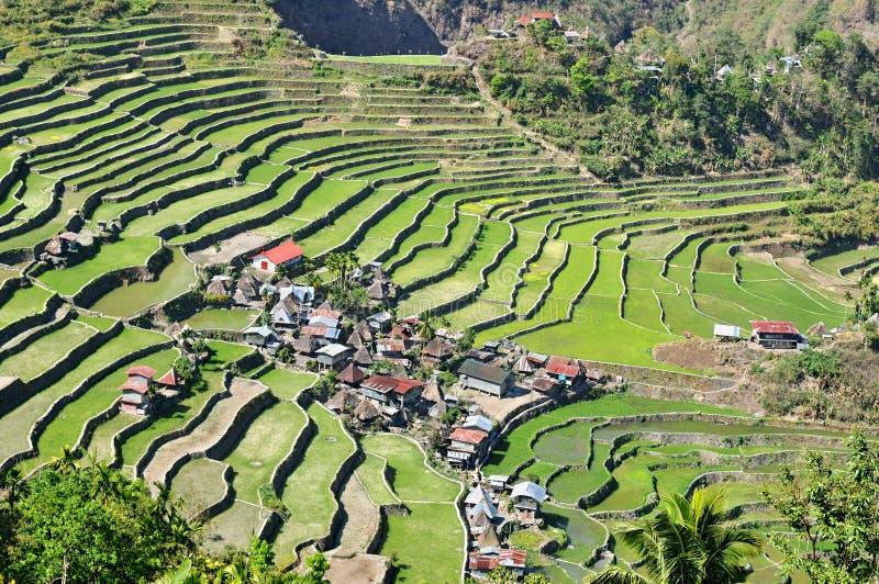 Terraços do arroz de Batad imagens de stock