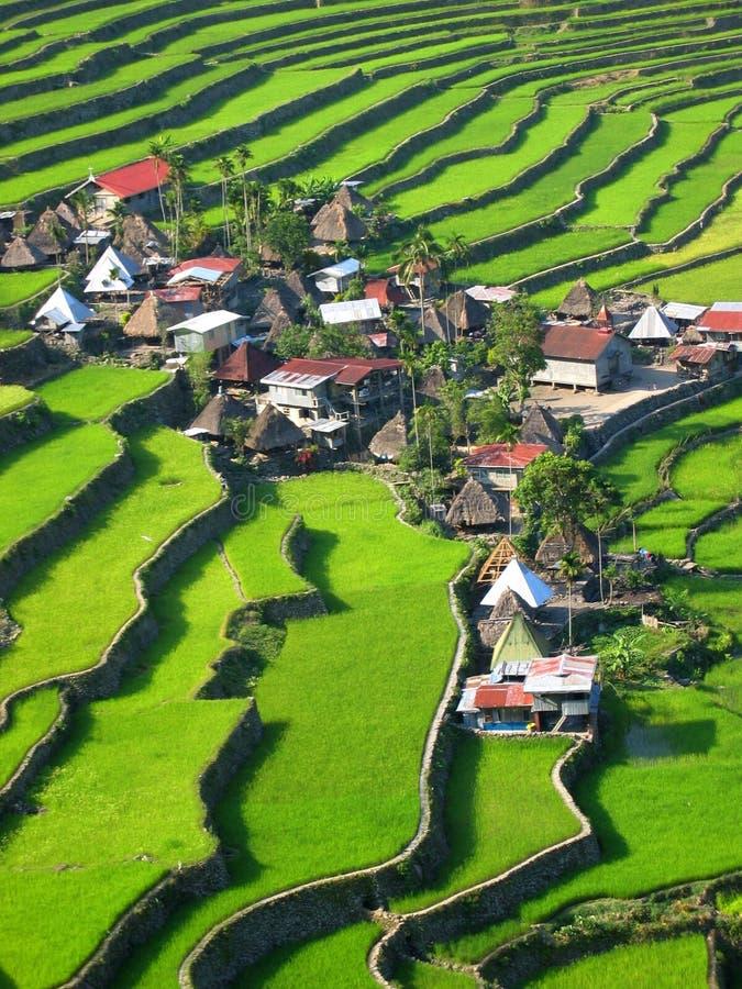 Terraços do arroz de Batad fotos de stock