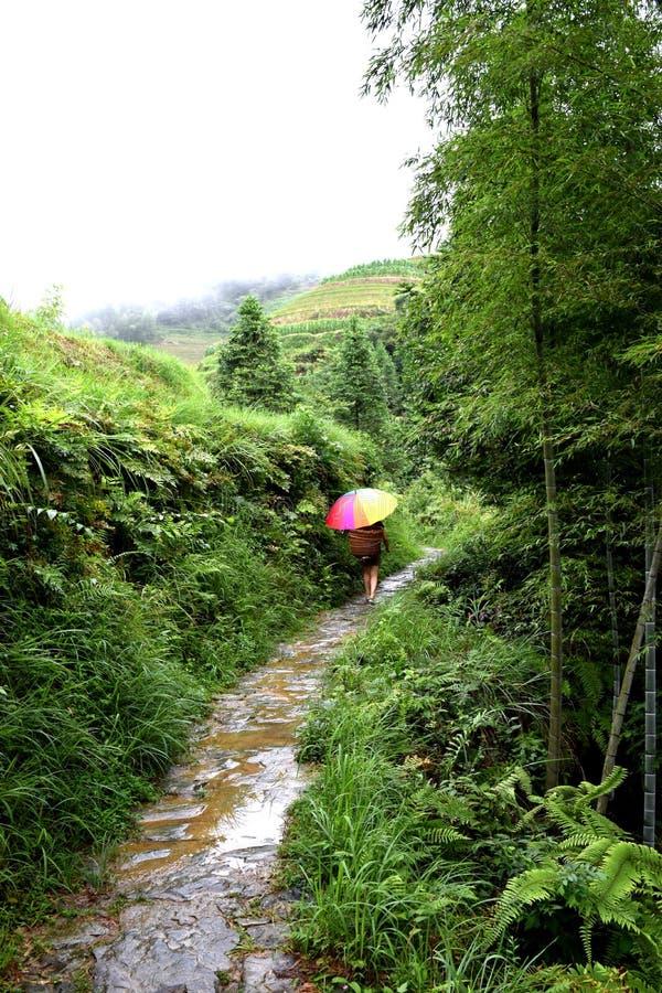 Terraços do arroz de Longsheng, Guilin imagens de stock royalty free