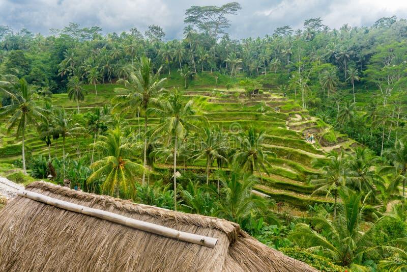 Terraços do arroz de Tegalalang fotografia de stock