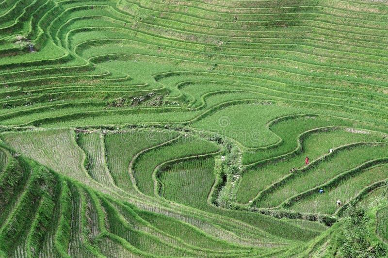 Terraços do arroz, Guilin, China imagem de stock