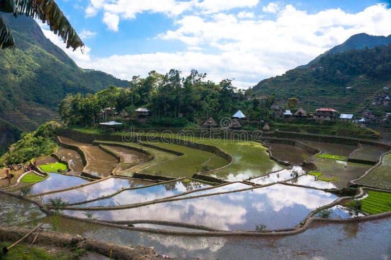 Terraços do arroz na montanha foto de stock royalty free