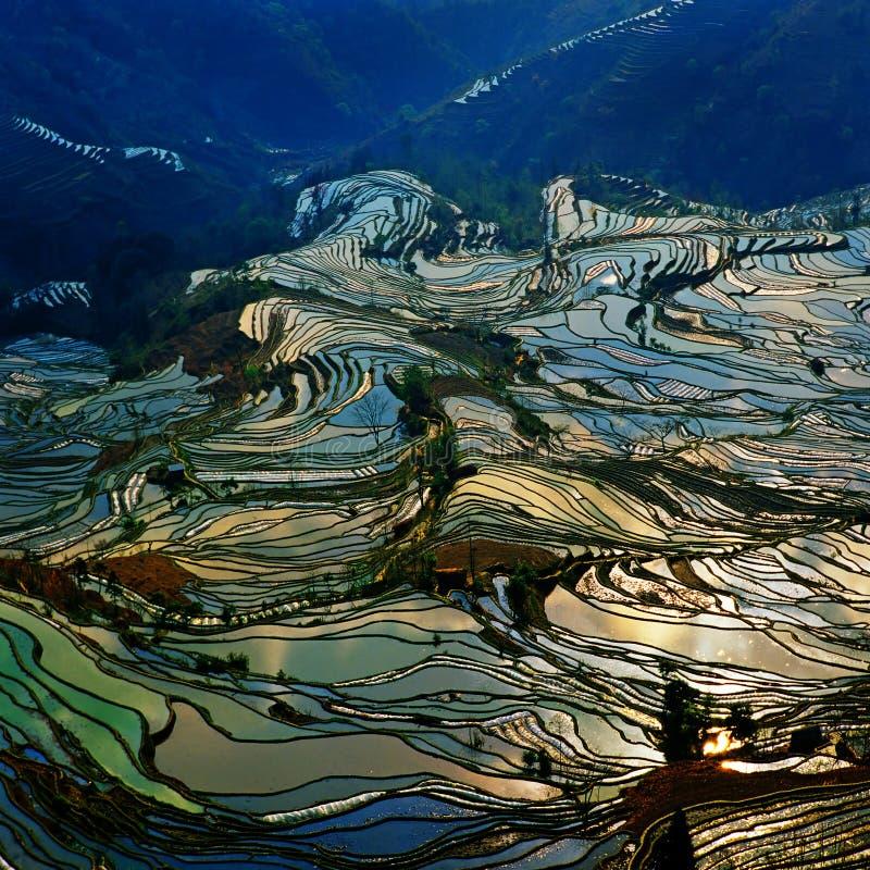 Terraços dourados do yuanyang fotos de stock royalty free
