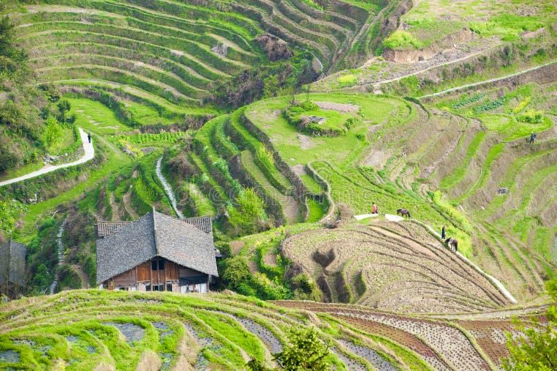 Terraços em Longsheng, China do arroz imagens de stock