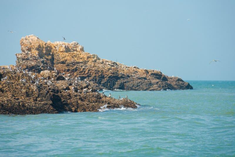 Terra accoppiamento della sterna crestata dell'isolotto roccioso fotografie stock