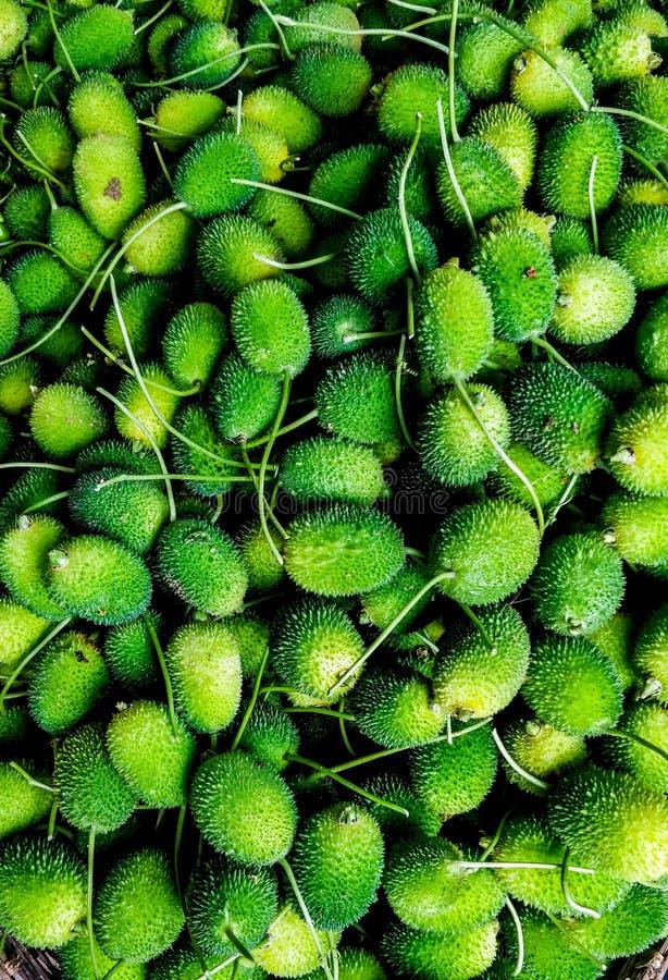 Terra amara verde immagine stock