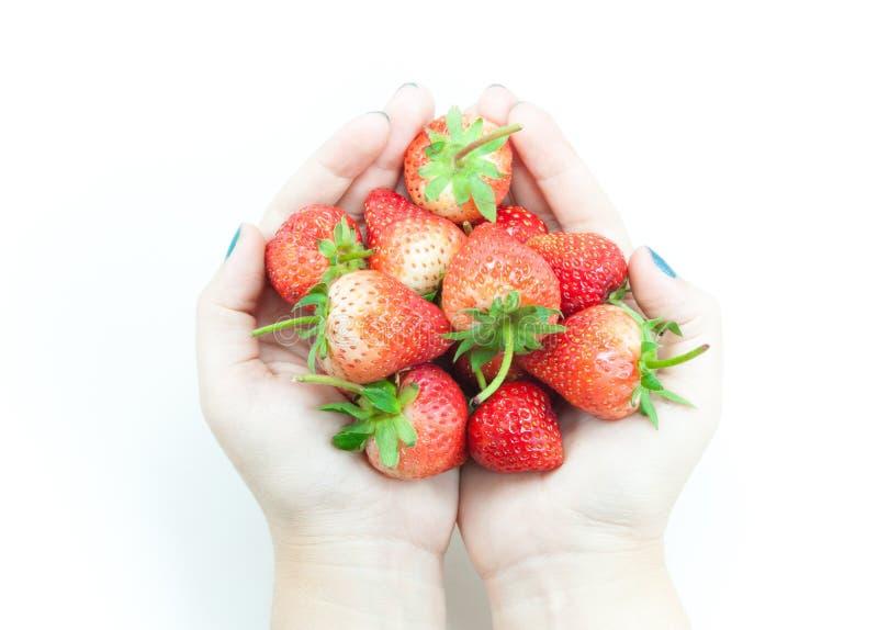 Terra arrendada fresca da mão da mulher das morangos, uma morango apetitosa na mão de arrelia do ` s da mulher no branco fotografia de stock