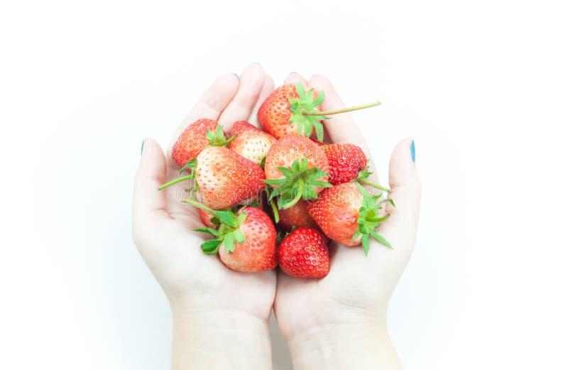 Terra arrendada fresca da mão da mulher das morangos, uma morango apetitosa na mão de arrelia do ` s da mulher no branco imagem de stock royalty free