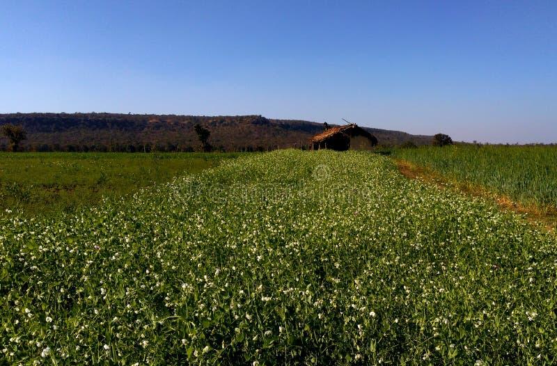 Terra bonita e paisagem, samarda, Bhopal, Índia imagem de stock royalty free