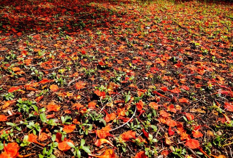 Terra coberta por flores foto de stock