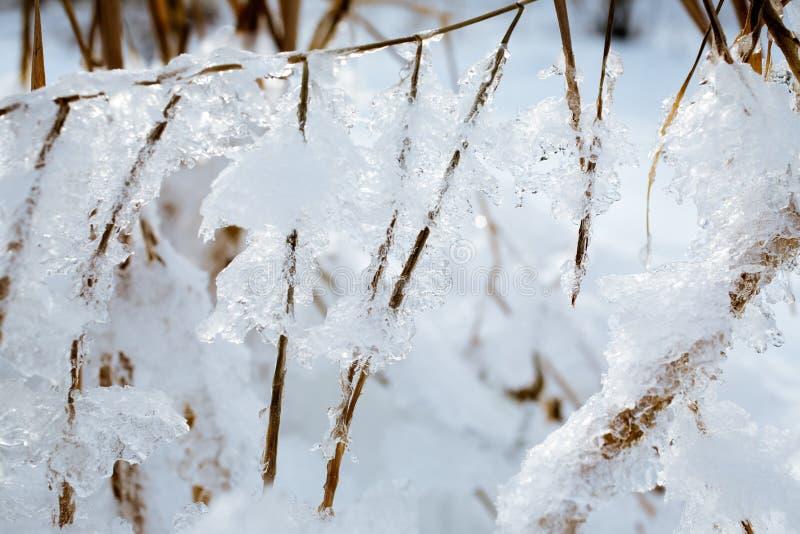 Terra congelada imagens de stock