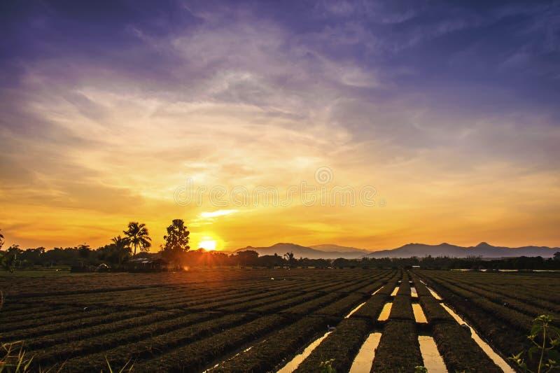 Terra cultivada em uma paisagem rural no por do sol fotos de stock