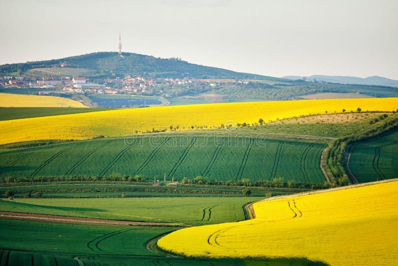 Terra da mola em montes Campos verdes e amarelos da mola fotos de stock