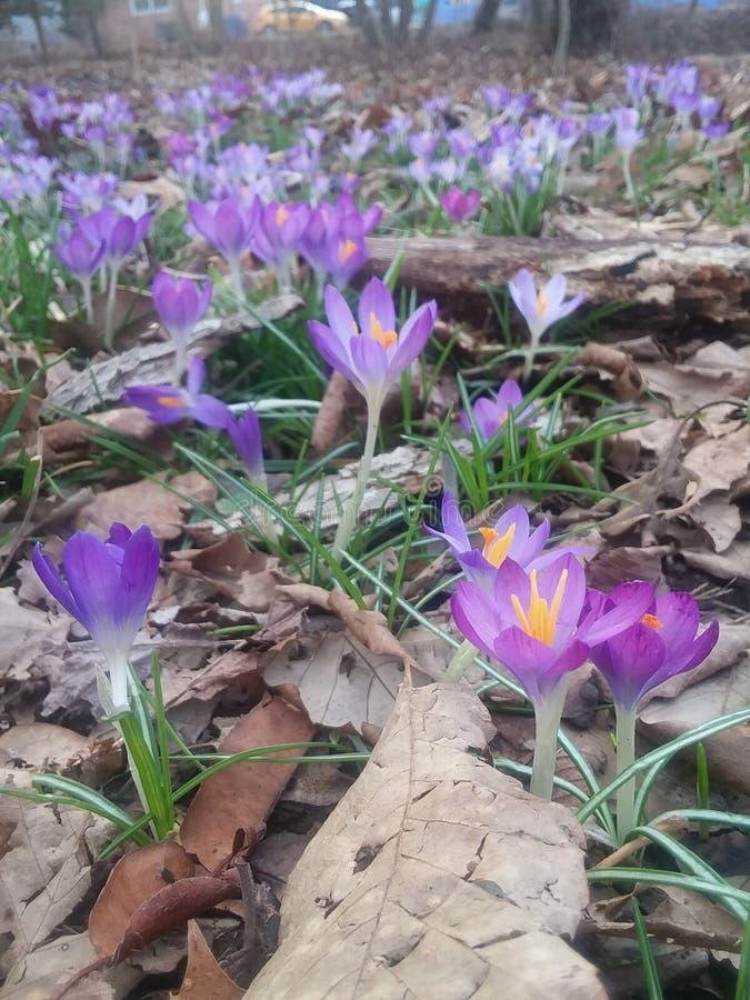 Terra das flores do comitê fotografia de stock royalty free