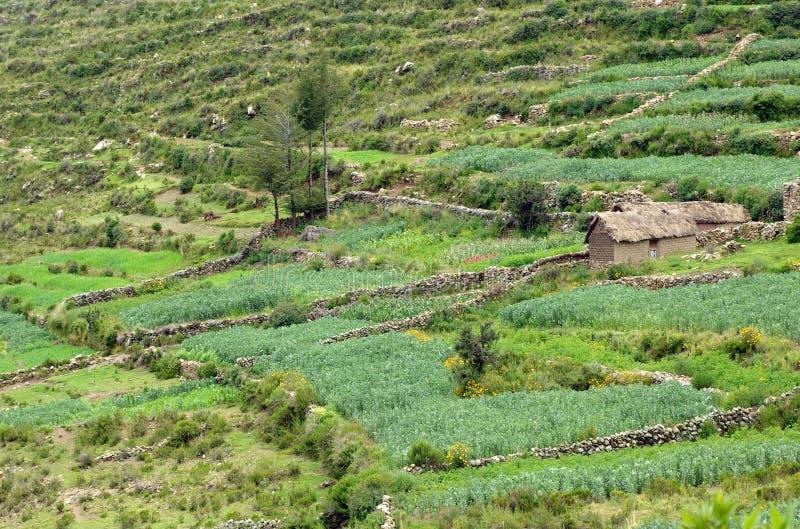 Terra de Agricol em Bolívia fotografia de stock royalty free