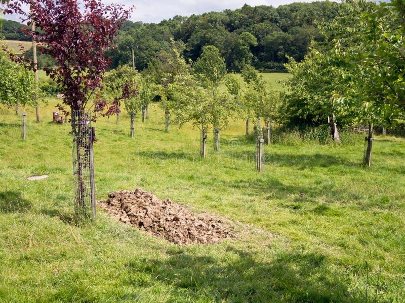 Terra de enterro natural foto de stock