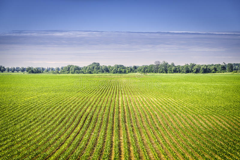 Terra de exploração agrícola orgânica com fileiras fotografia de stock royalty free