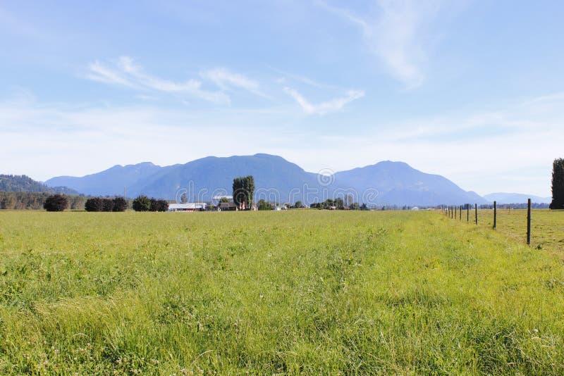 Terra de pasto em Canadá foto de stock royalty free