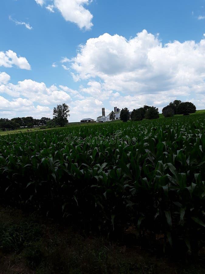 Terra dell'azienda agricola con le nuvole immagini stock libere da diritti