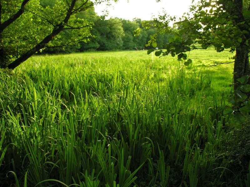 Terra dell'azienda agricola di Valey fotografie stock