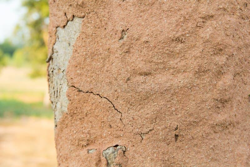 Terra della corteccia di albero della copertura delle termiti che fa il monticello della termite fotografia stock libera da diritti