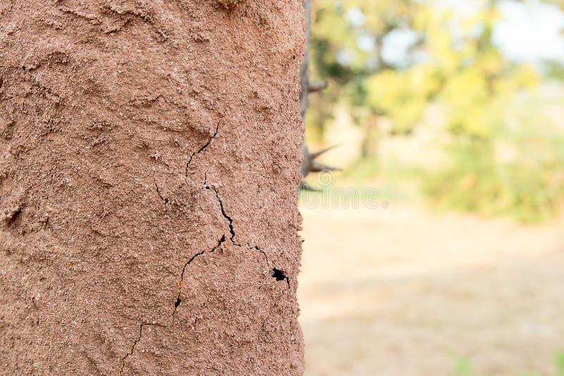 Terra della corteccia di albero della copertura delle termiti che fa il monticello della termite immagine stock