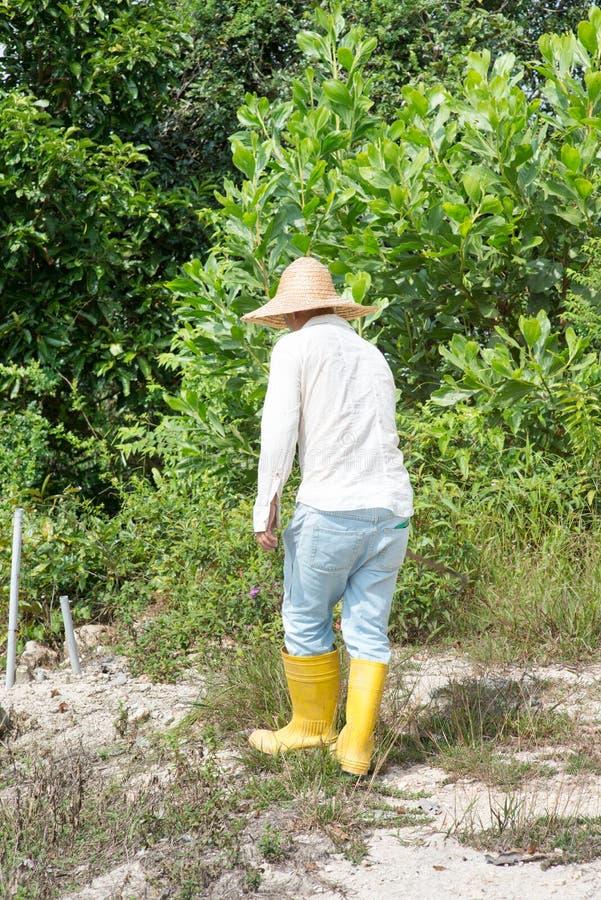 Terra di schiarimento dell'agricoltore fotografia stock