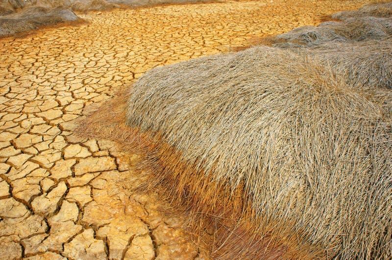 Terra di siccità, mutamento climatico, estate calda immagini stock