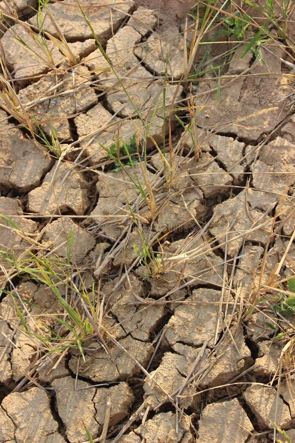 A terra do arroz estéril não podia executar devido à plantação imagens de stock royalty free
