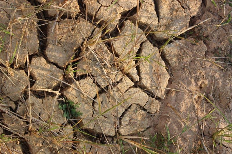 A terra do arroz estéril não podia executar devido à plantação imagens de stock