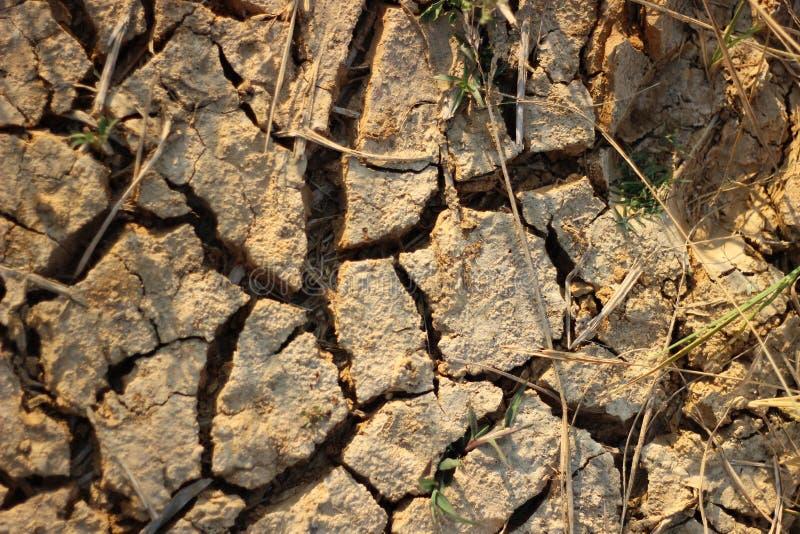 A terra do arroz estéril não podia executar devido à plantação fotografia de stock royalty free