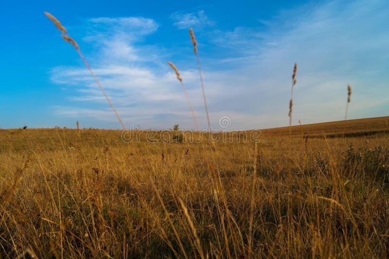 Terra do céu do campo imagens de stock