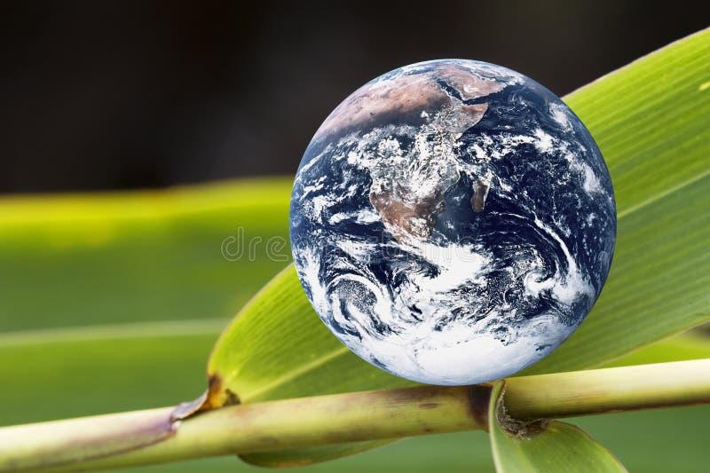 Terra do planeta na folha de bambu verde fotografia de stock royalty free