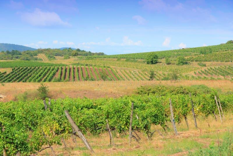 Terra do vinho de Hungria fotografia de stock