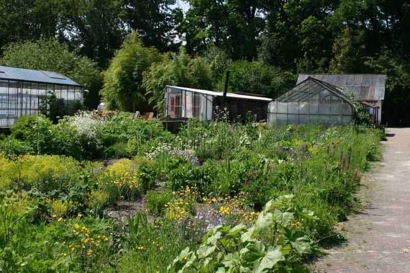 Terra e horticultura biológica Boschzigt fotografia de stock royalty free