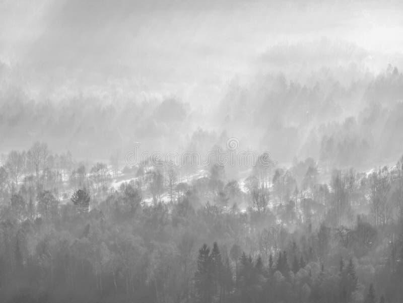 A terra enevoada As árvores e os picos altos do monte aumentaram da névoa grossa imagens de stock royalty free