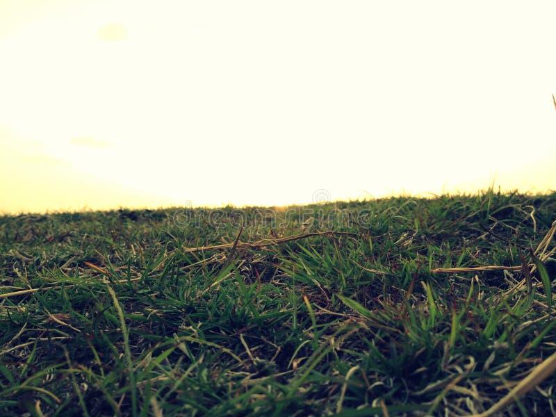 Terra erbosa fotografie stock